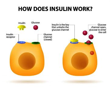 MS meta-how-does-insulin-work-1024x819