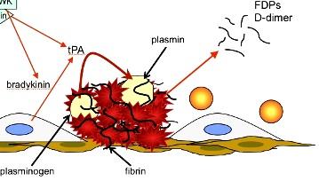 lpa-fibrinolysis3