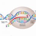 DNA DOGMA2