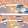 PCSK9-role-in-the-liver-A-and-mechanism-of-action-of-anti-PCSK9-monoclonal
