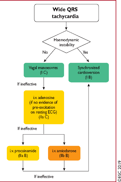 tachy Acute therapy of wide complex tachycardia in the absence of an established diagnosis ehz467f5