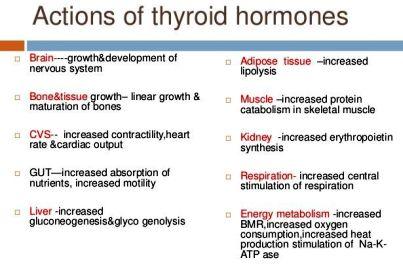 thyroid-hormones-13-638