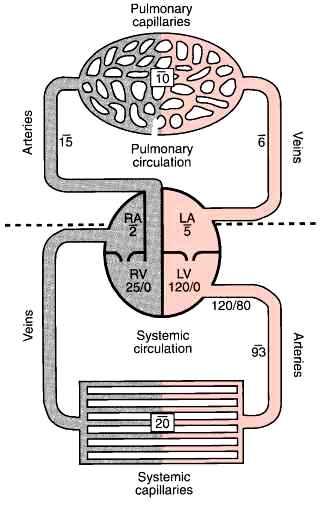 PVR 3430_426_304-resistance-cardiac-output