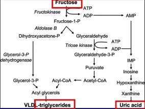 gout Fructose to uric