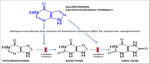 gout The-reaction-cascade-of-allopurinol-in-xanthine-oxidase-inhibition-mechanism-and-uric