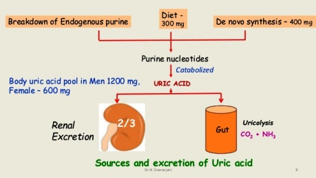 gout purine-catabolism-8-638