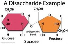 sug disaccharide-example-300x194