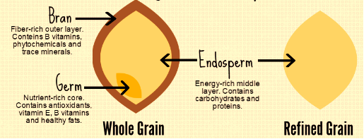 fib whole-grain-diagram