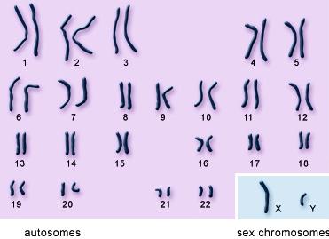 dna chromosomes