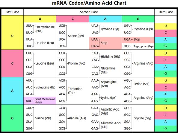 incl DNA-codon-amino-acid3