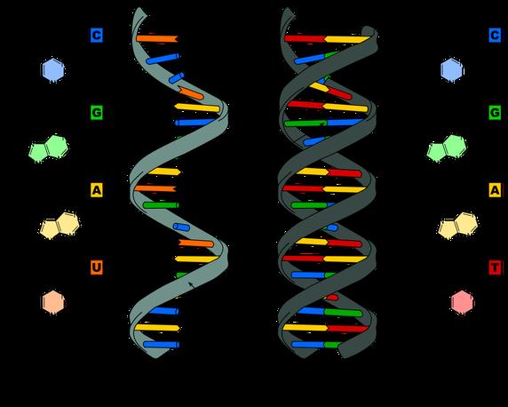 incl DNA-main-qimg-5398cece5f635d3f1cead383ef3766f5