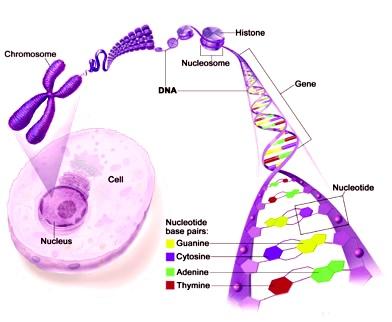 incl understanding-genes