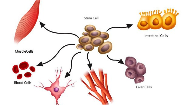 dna What-are-stem-cells-definition-FEATURE- (1)