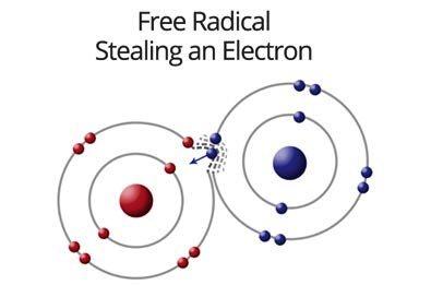 dna free-radical-stealing