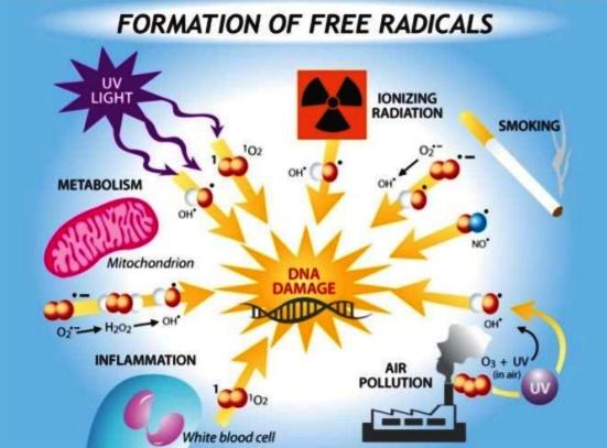 dna oxidative-stress-7-638