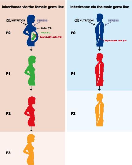 epig 4-Figure1-1