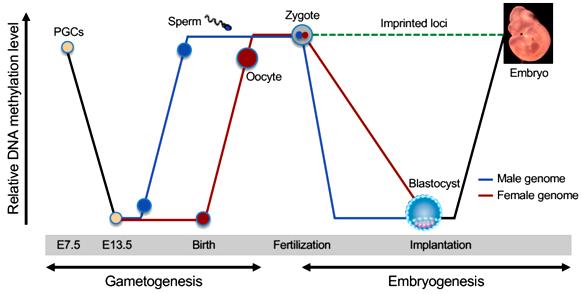 epig genes-10-00257-g001