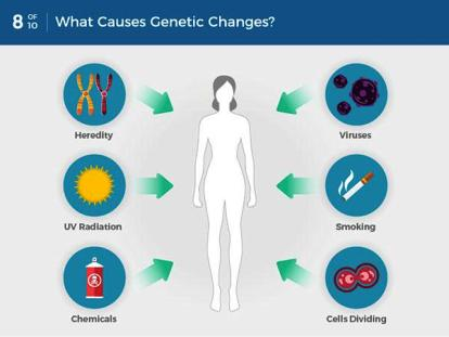 can 8-what-causes-genetic-changes