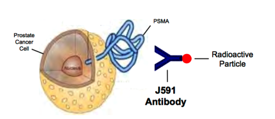 can j591_psma