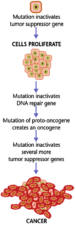 dna bb Cancer_requires_multiple_mutations_from_NIHen