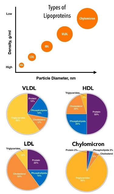 chol Lipoprotein-Types