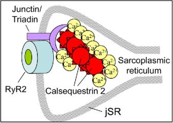 CP 2-Figure1-1