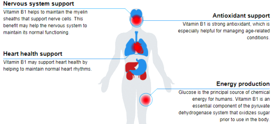 b1 vitamin-b1-thiamine-benefits-diagram