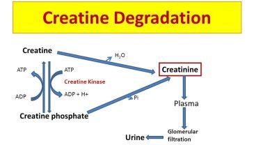 b6 cin-creatin-slide_10