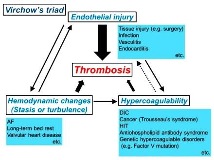 coag cancers-11-00488-g002-550