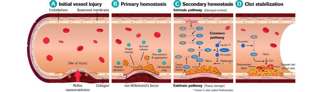 thrombo BloodClotFormation