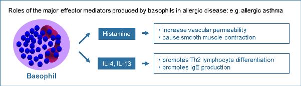 anosia Basophils-figure-1