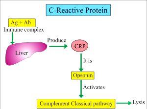 anosia CRP-6