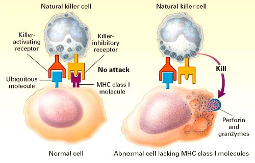 anosia NK2