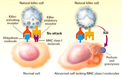 anosia-NK2