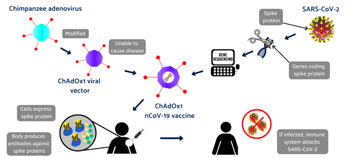 cor Covid-19_vaccine_infographic_Oxford (1)