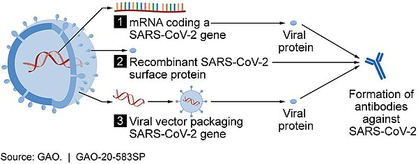 cor cov-600px-Vaccine_candidate_mechanisms_for_SARS-CoV-2_49948301838