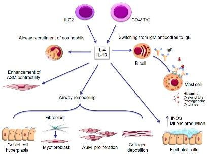 anosia fig1