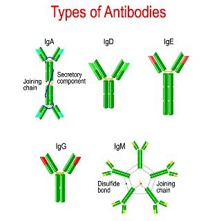 anosia ucture-glycoproteins-bind-specific-antigens-vector-diagram-educational-medical-153012137