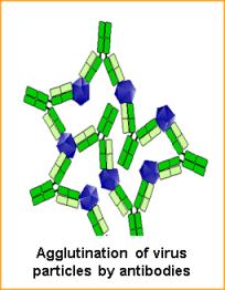 anosia Immune-responses-to-viruses-Figure-2a