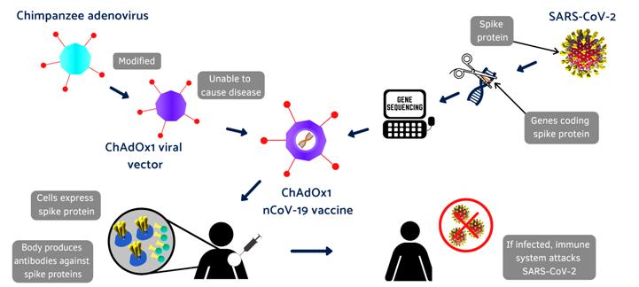 cor-Covid-19_vaccine_infographic_Oxford-1