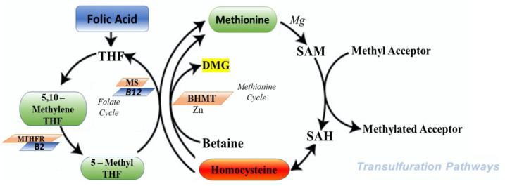 homo metabolites-11-00037-g002