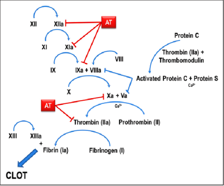thromb 2-Figure1-1