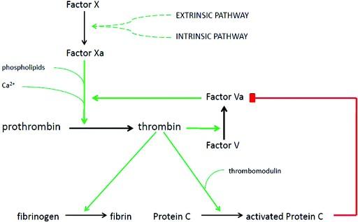 thromb 4ff1