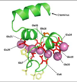 thromb 5-Figure2-1