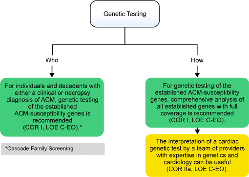 ar Genetic-testing-recommendations-Cascade-family-screening-see-Section-39-ACM