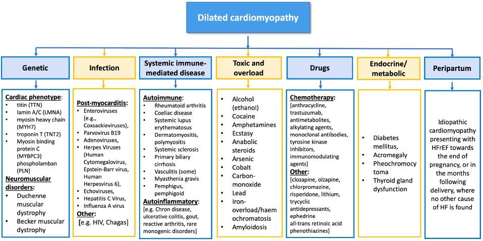 ar dilated-cardiology-differential-causes-cardiomyopathy-original